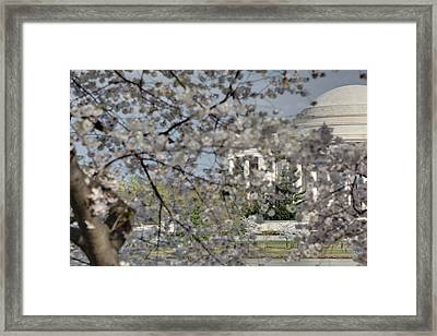 Cherry Blossoms With Jefferson Memorial - Washington Dc - 011335 Framed Print