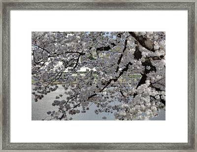 Cherry Blossoms With Jefferson Memorial - Washington Dc - 011338 Framed Print by DC Photographer