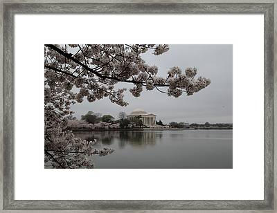 Cherry Blossoms With Jefferson Memorial - Washington Dc - 011343 Framed Print