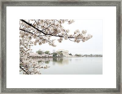 Cherry Blossoms With Jefferson Memorial - Washington Dc - 011344 Framed Print