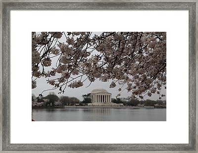 Cherry Blossoms With Jefferson Memorial - Washington Dc - 011347 Framed Print