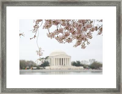 Cherry Blossoms With Jefferson Memorial - Washington Dc - 011350 Framed Print by DC Photographer