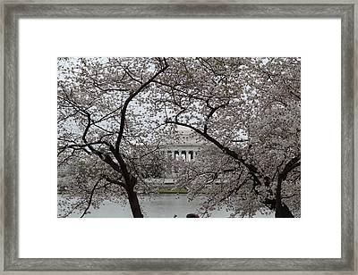 Cherry Blossoms With Jefferson Memorial - Washington Dc - 011352 Framed Print