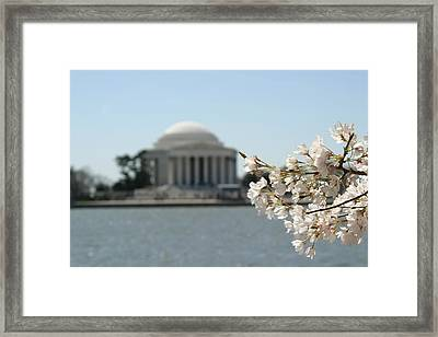 Cherry Blossoms With Jefferson Memorial - Washington Dc - 01136 Framed Print