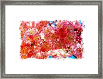 Cherry Blossums Framed Print