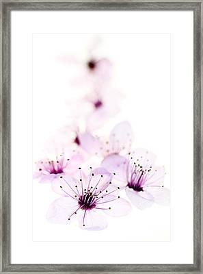 Cherry Cascade Framed Print by Rebecca Cozart