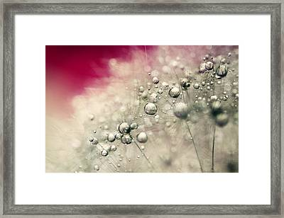Framed Print featuring the photograph Cherry Dandy Drops by Sharon Johnstone