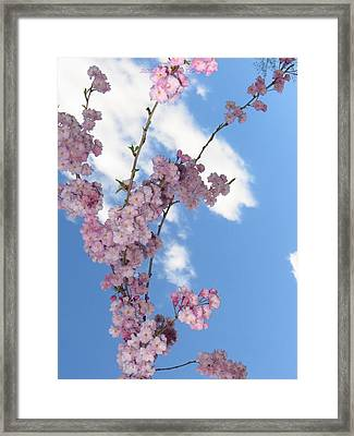 Cherry Floral Fountain Framed Print by Sonali Gangane