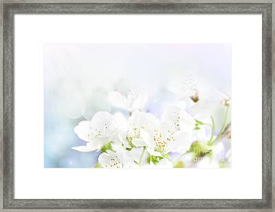 Cherry Flowers Framed Print by Mythja  Photography