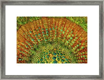 Cherry Leaf Stalk Framed Print by Marek Mis