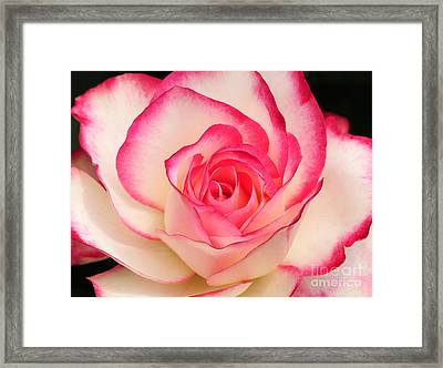 Cherry Parfait Rose Framed Print by Olivia Hardwicke