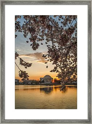 Cherry Sunrise Burst Framed Print