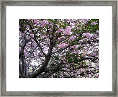 Cherry Tree 3 Framed Print by Mimi Saint DAgneaux