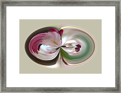 Cherry Tree Blossom Series 802 Framed Print