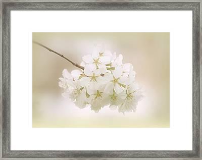 Cherry Tree Blossoms Framed Print by Sandy Keeton