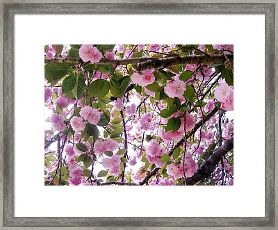 Cherry Tree Close-up Framed Print by Mimi Saint DAgneaux