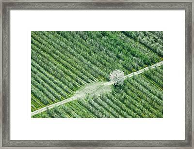 Cherry Tree Framed Print by Davorin Mance