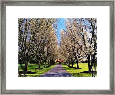 Cherry Tree Lane Framed Print