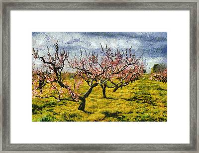Cherry Trees 3.0 Framed Print by Michelle Calkins