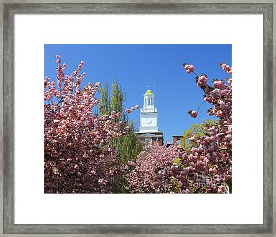 Cherry Trees And Village Hall Framed Print