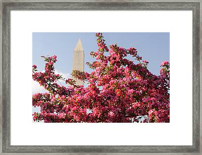 Framed Print featuring the photograph Cherry Trees And Washington Monument 5 by Mitchell R Grosky