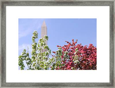 Framed Print featuring the photograph Cherry Trees And Washington Monument Four by Mitchell R Grosky