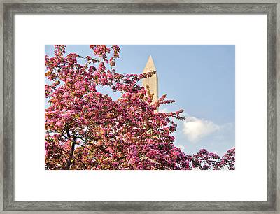 Framed Print featuring the photograph Cherry Trees And Washington Monument One by Mitchell R Grosky