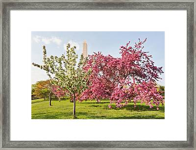 Framed Print featuring the photograph Cherry Trees And Washington Monument Three by Mitchell R Grosky