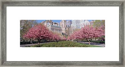 Cherry Trees, Battery Park, Nyc, New Framed Print by Panoramic Images