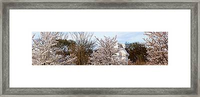 Cherry Trees In Front Of A Memorial Framed Print by Panoramic Images