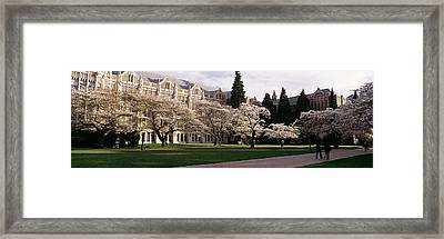 Cherry Trees In The Quad Framed Print