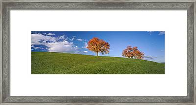 Cherry Trees On A Hill, Cantone Zug Framed Print