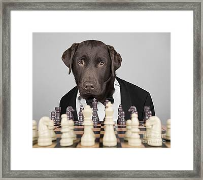 Chess Dog Framed Print by Justin Paget
