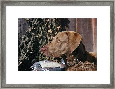 Chessie - Fs000012 Framed Print by Daniel Dempster