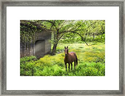 Chestnut Horse In A Sunny Meadow Framed Print by Debra and Dave Vanderlaan