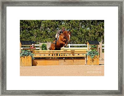 Chestnut Hunter Framed Print