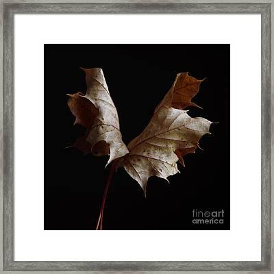 Chestnut Leaf Framed Print by Bernard Jaubert