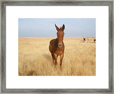 Chestnut Mule In Gold Framed Print