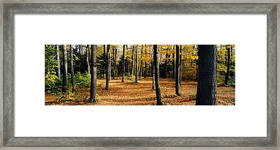 Chestnut Ridge Park Orchard Park Ny Usa Framed Print by Panoramic Images