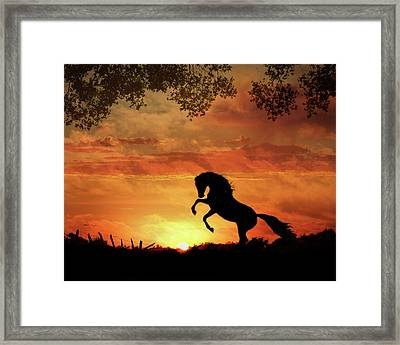 Chestnut Sunset Framed Print