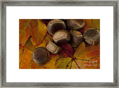 Chestnuts And Fall Leaves Framed Print