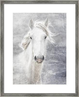 cheval de la Camargue Framed Print