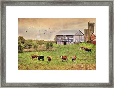 Chew Mail Pouch Framed Print by Lori Deiter