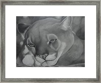 Cheyenne Framed Print by Christine  Blodgett