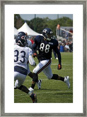 Chicago Bears Te Dante Rosario Training Camp 2014 04 Framed Print by Thomas Woolworth