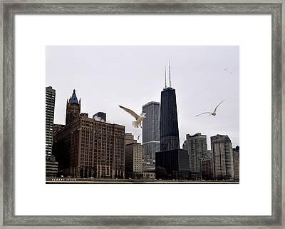 Chicago Birds 2 Framed Print