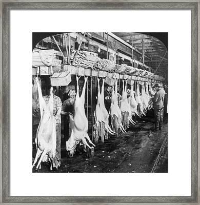 Chicago Meatpacking, C1906 Framed Print