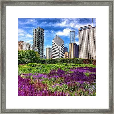 Chicago Skyline At Lurie Garden Framed Print