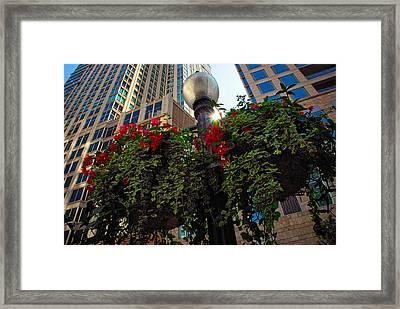 Chicago Street Light Framed Print by Lynn Bauer