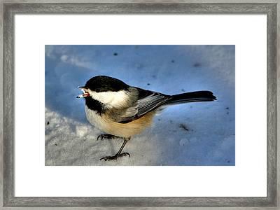 Chick-a-dee-dee-dee Framed Print by Larry Trupp